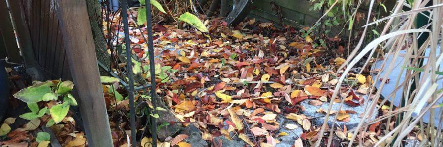 Laub Herbstlaub