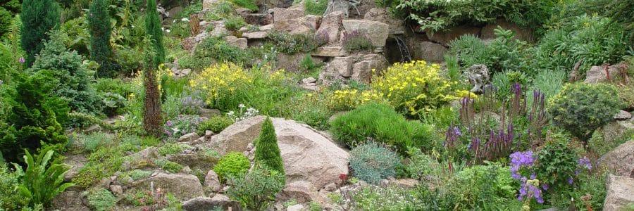 Pflanzen für Hangflächen